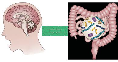 Kết quả hình ảnh cho trục não ruột